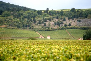 Burgundy,_France_wine_region