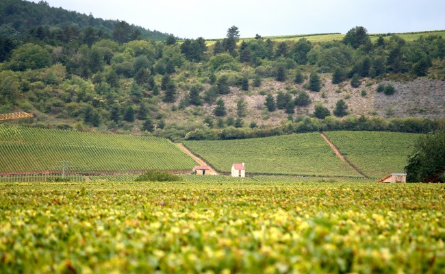 Burgundy,_France_wine_region