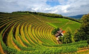 burgundy-wine-guide-vineyard