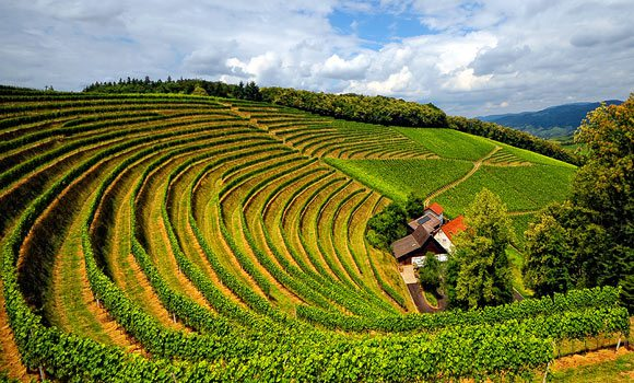 burgundy-wine-guide-vineyard
